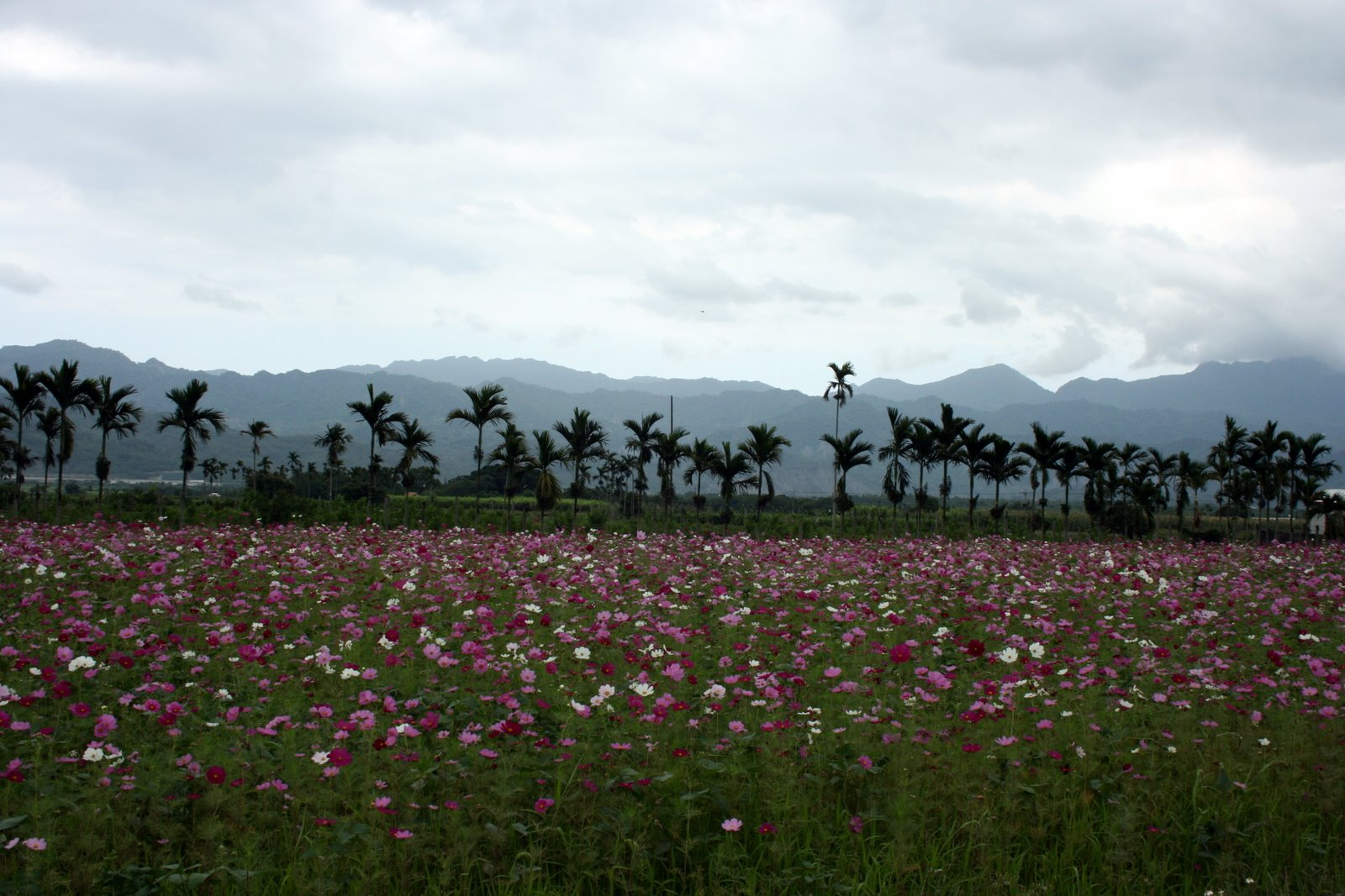 A Tanka About Formosa (Beautiful Island) - Poem by Chenou Liu